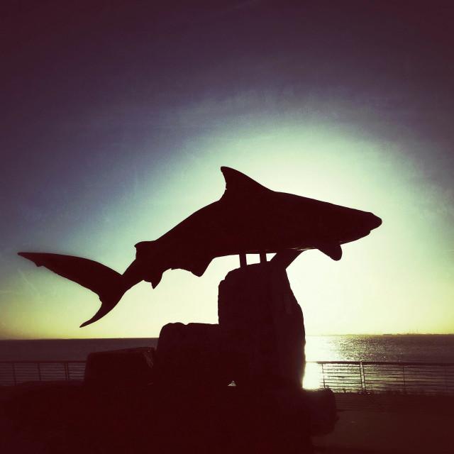 """Reef Shark silhouette"" stock image"
