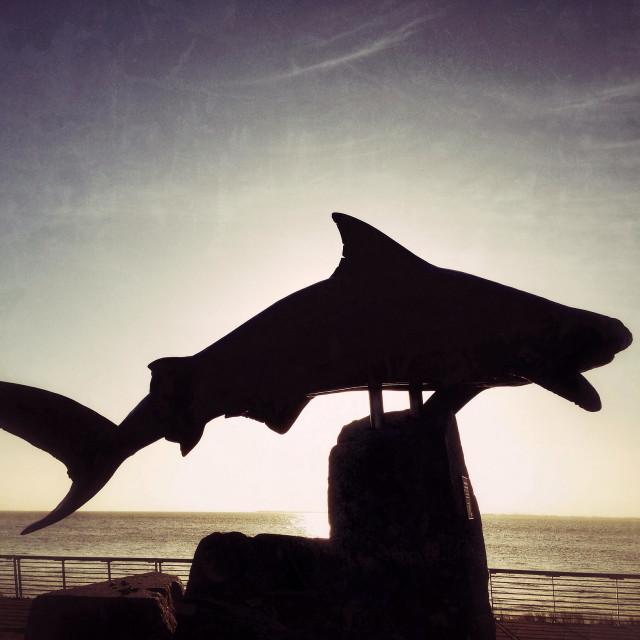 """Reef Shark silhouette at sunrise"" stock image"