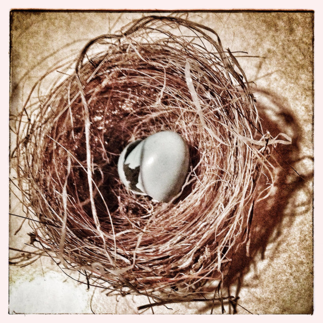 """""""Broken birds egg in nest"""" stock image"""