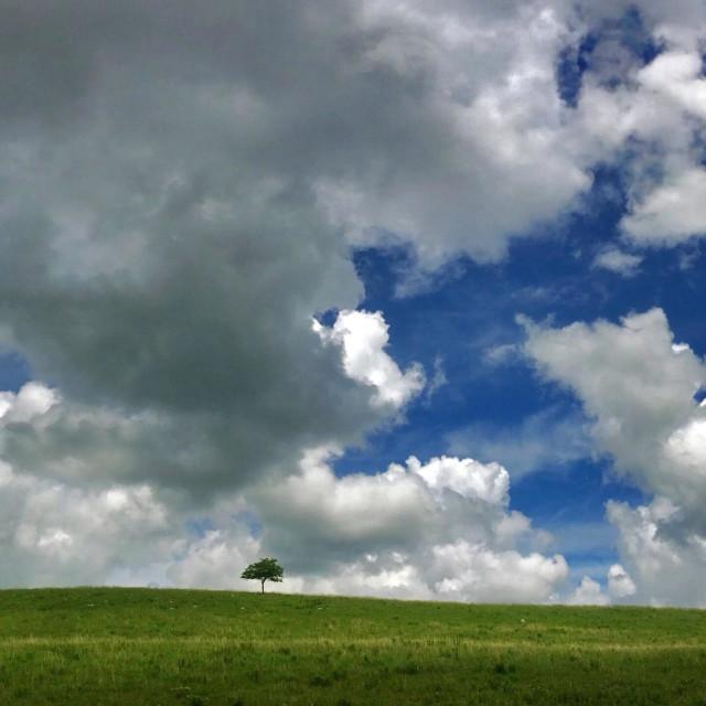 """Lone tree in Kansas Flint Hills."" stock image"