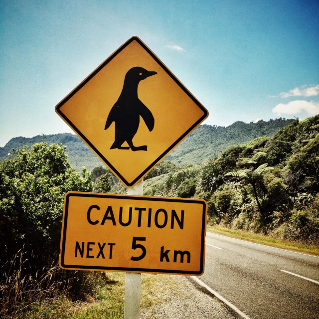 """Penguin next 5 km"" stock image"