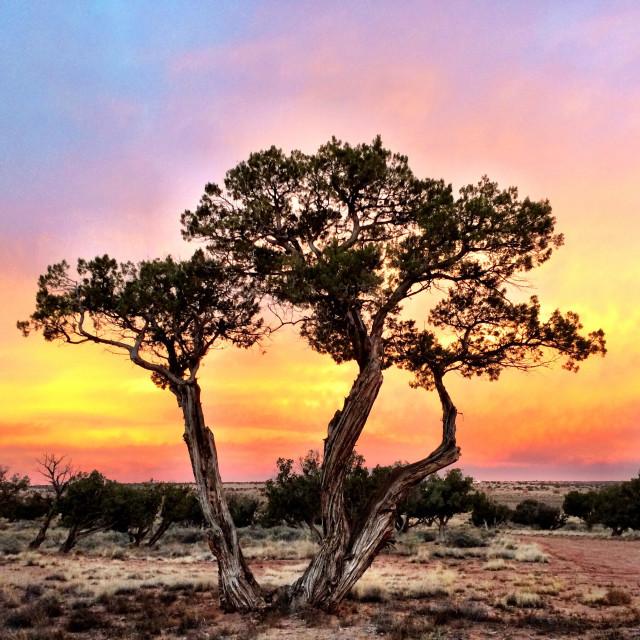 """Juniper Sunset"" stock image"