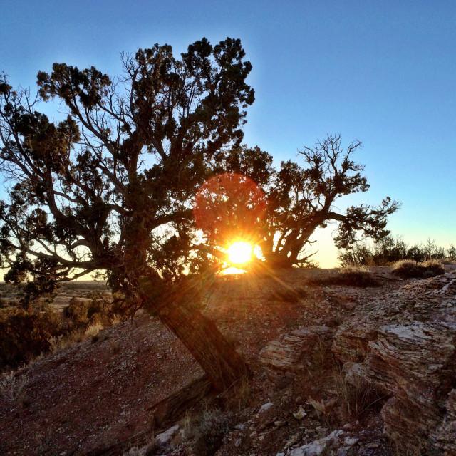 """Juniper Mesa Sun"" stock image"