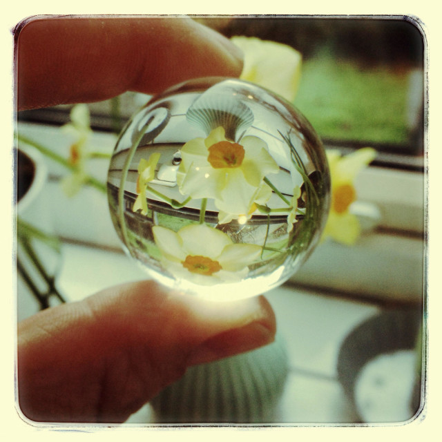 """""""Vase of daffodils reflected in a glass ball"""" stock image"""
