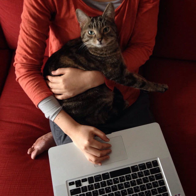"""""""Working from home, with Apple Mac laptop, and cat."""" stock image"""
