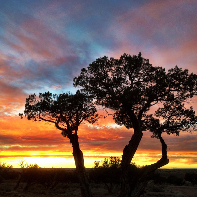 """""""High desert juniper color."""" stock image"""