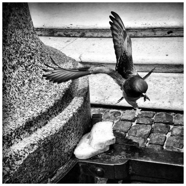 """""""Pigeon in Rome"""" stock image"""