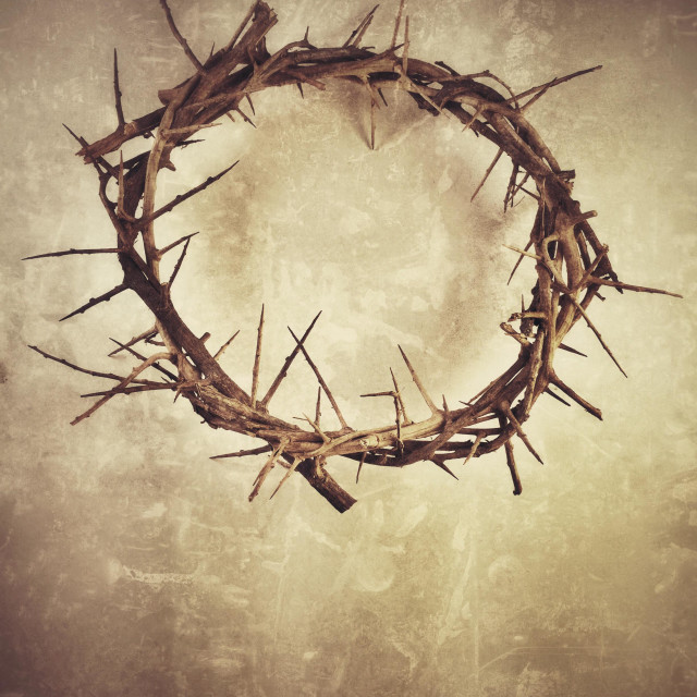 """""""Crown of Thorns"""" stock image"""