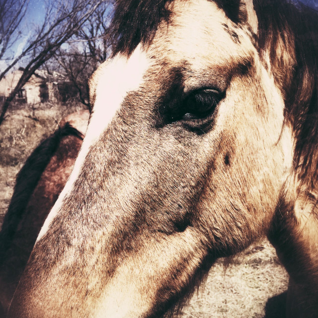 """""""Horse in town rural city"""" stock image"""