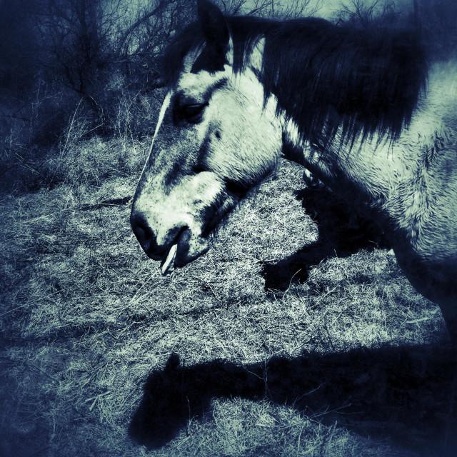 """Gilding Horse"" stock image"