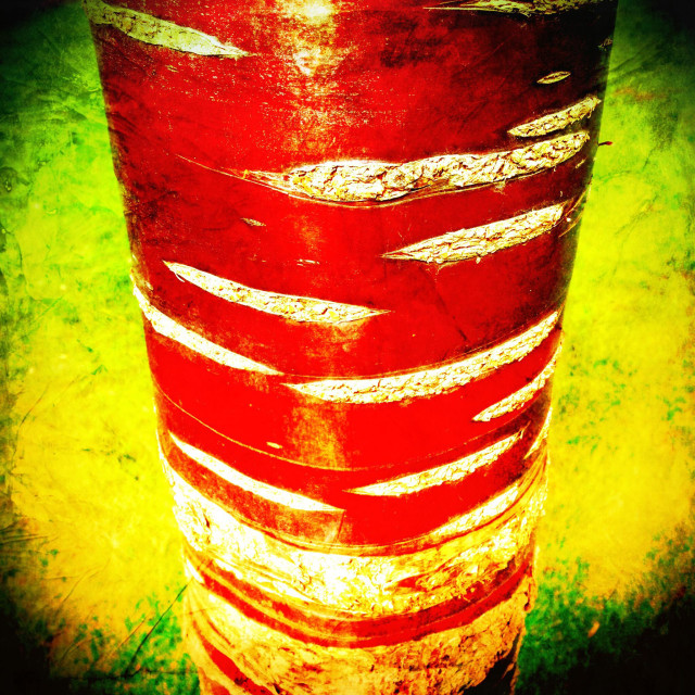 """""""Red stripy tree trunk"""" stock image"""