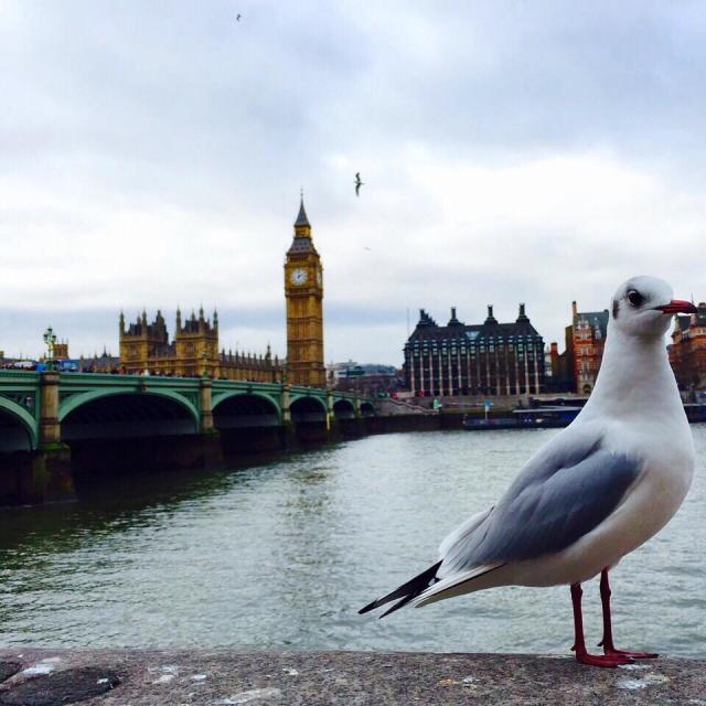 """Seagull at London"" stock image"