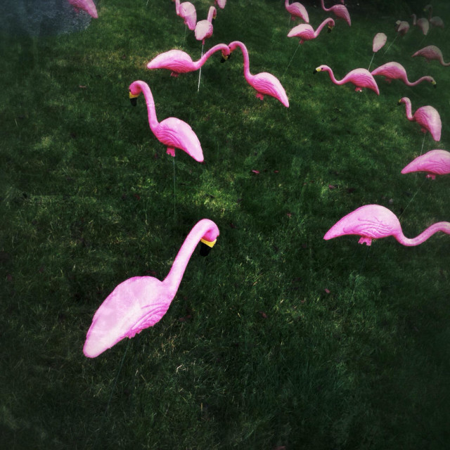 """""""Plastic pink flamingos on a lawn"""" stock image"""