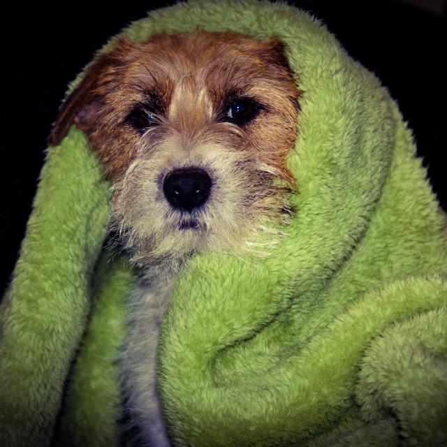 """""""Dog freezing"""" stock image"""