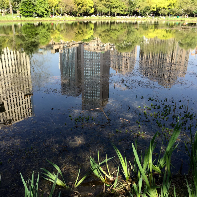 """""""City reflection in the lake"""" stock image"""