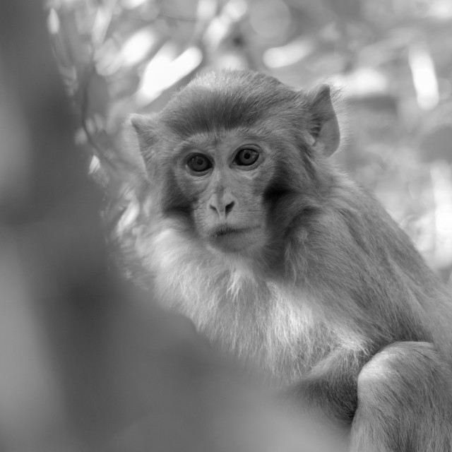 """Monkey in wild"" stock image"