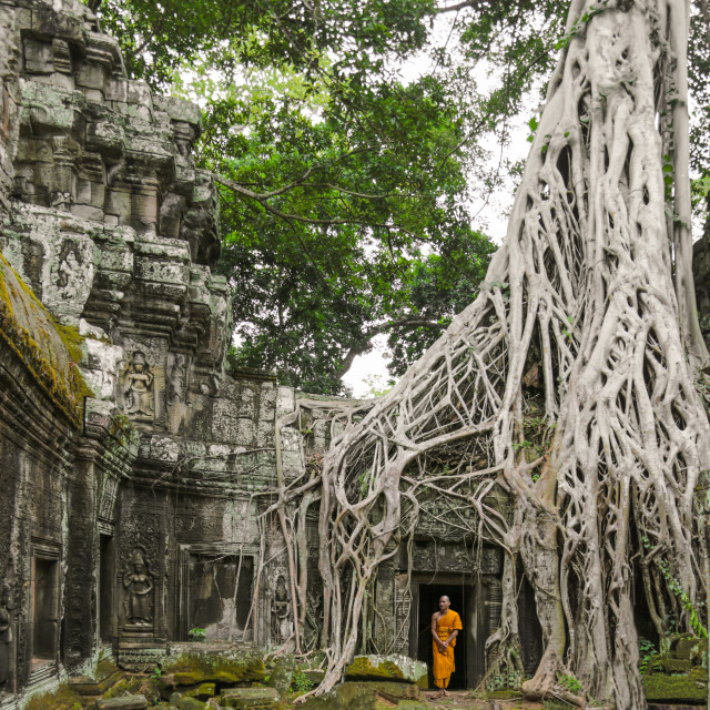 """Ta Prom Temple, Angkor Wat"" stock image"