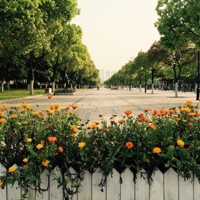 """""""Flowers and a boulevard in the park"""" stock image"""