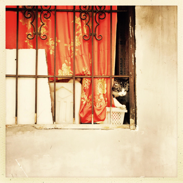 """""""Cat behind the window"""" stock image"""