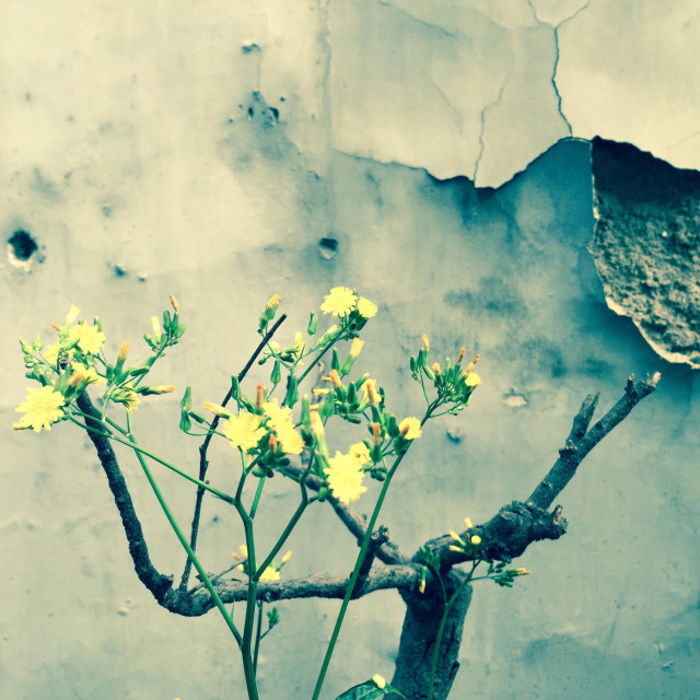 """""""Yellow flowers in front of the wall"""" stock image"""