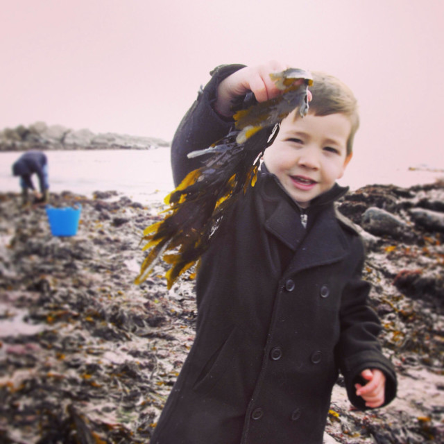 """Seaweed foraging"" stock image"