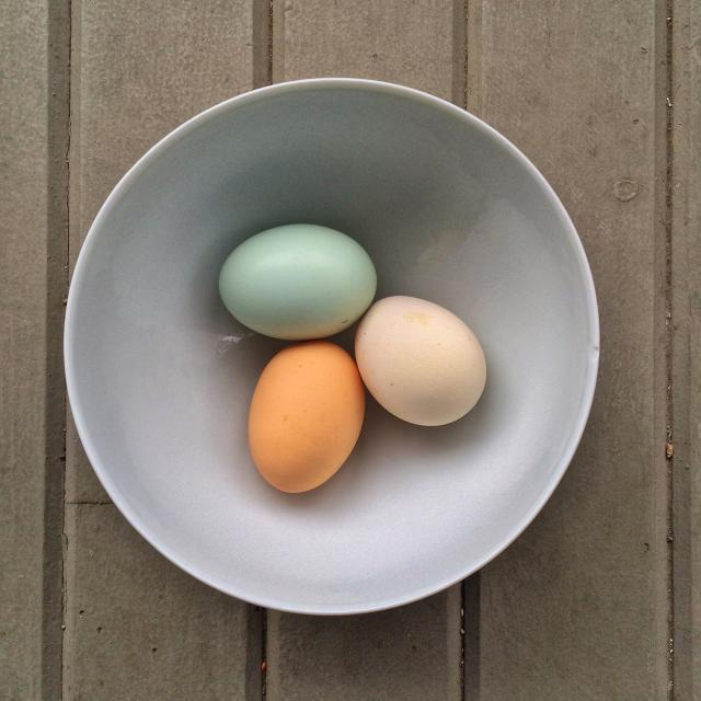 """""""Three free range chicken eggs in a bowl."""" stock image"""