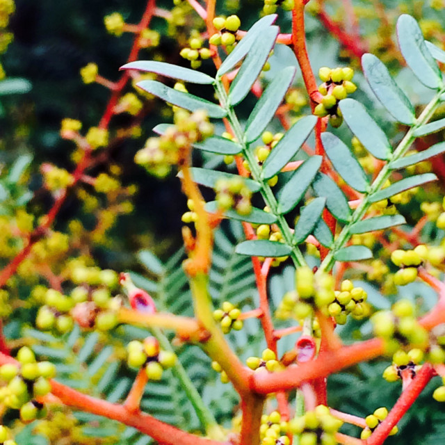 """""""Photog of a bush with colours like red, yellow and green."""" stock image"""