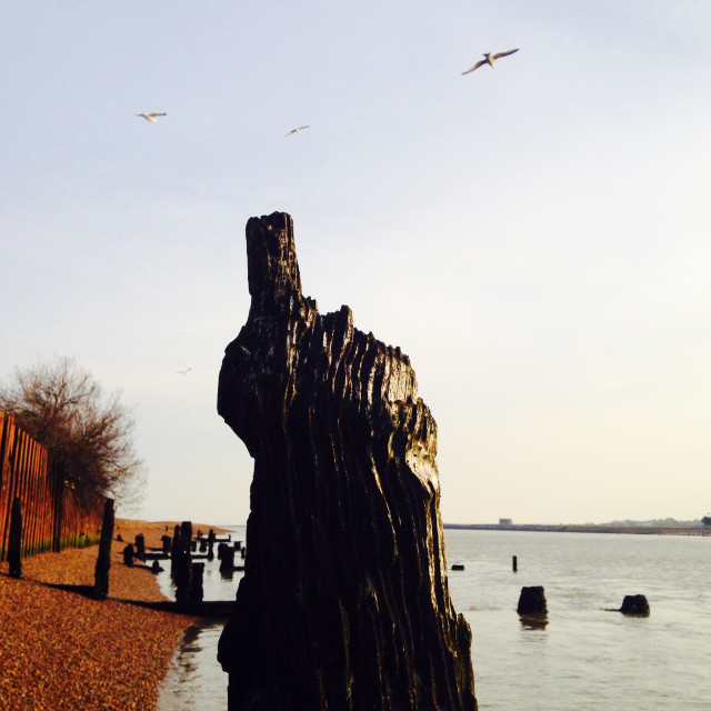 """Worn wooden groyne or breakwater, river Deben, Bawdsey Ferry, Suffolk, UK."" stock image"