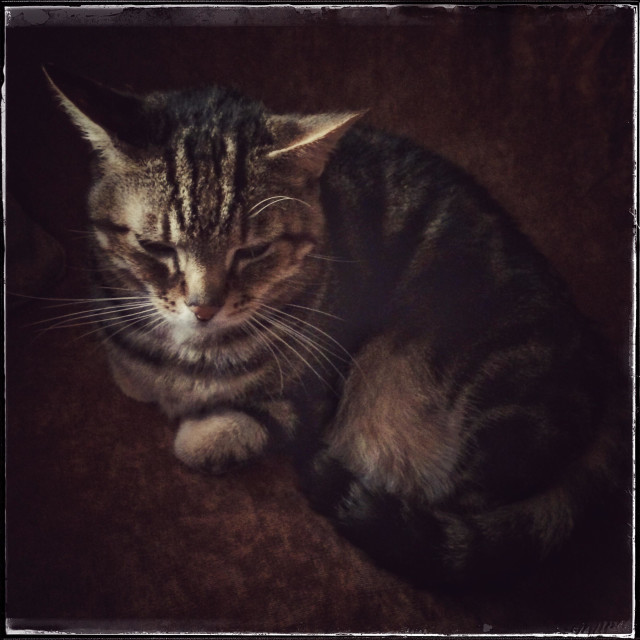 """Cat portrait ."" stock image"