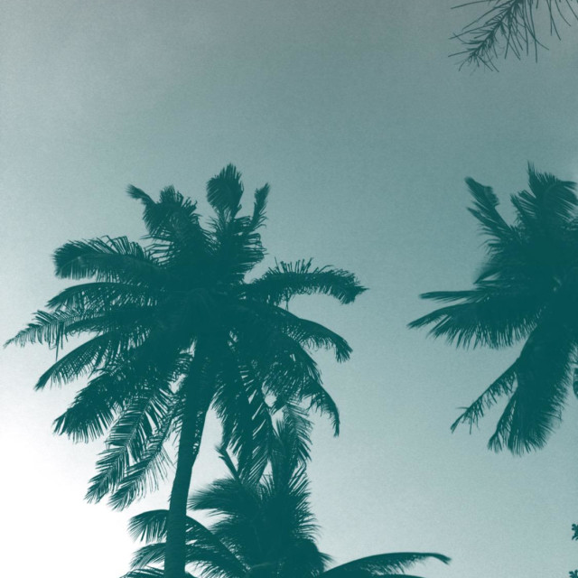 """Thailand Palm trees"" stock image"