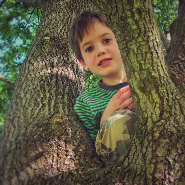 """""""Young boy looking out from the branches of a tree while climbing it"""" stock image"""