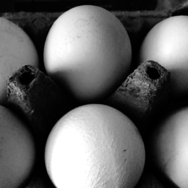 """Organic free-range eggs in carton"" stock image"