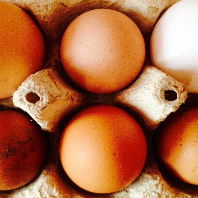 """""""Differently sized and coloured organic free-range eggs in carton"""" stock image"""