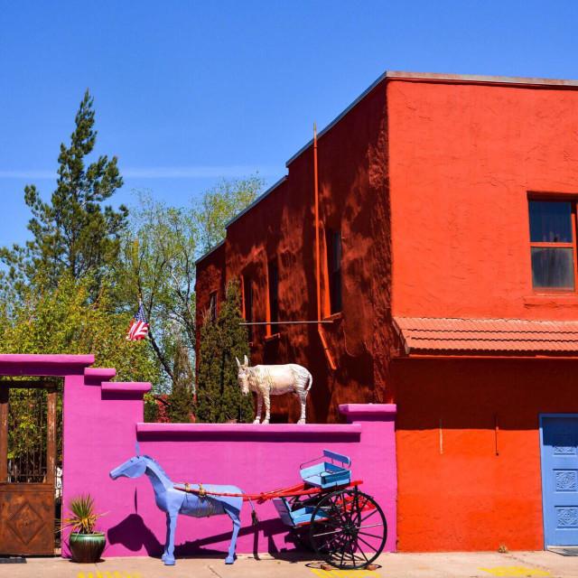 """""""Donkeys in the street in Carizozzo, NM"""" stock image"""