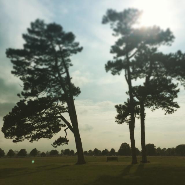 """Trees on Durdham Down in Bristol, UK."" stock image"