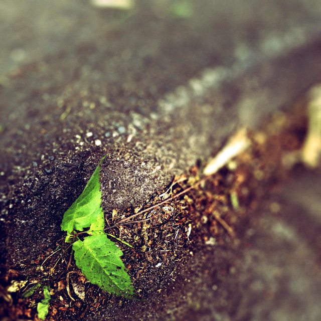 """Little Tree at the curb"" stock image"