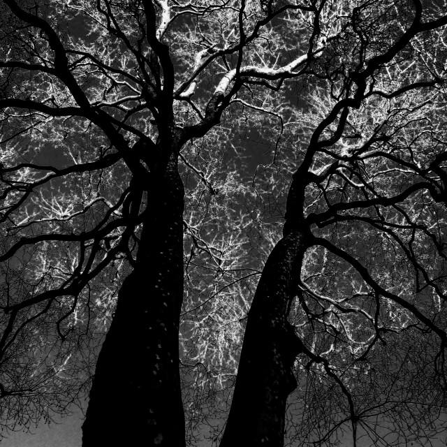 """London. The Brain Tree"" stock image"