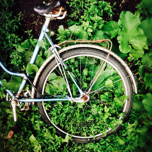 """Abandoned bicycle in the undergrowth"" stock image"