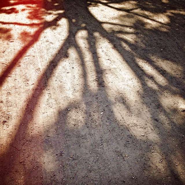 """Tree shadow"" stock image"
