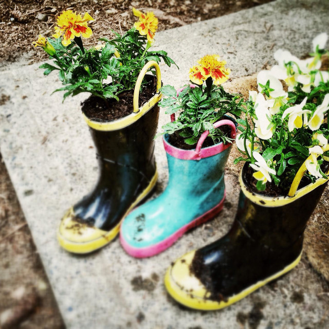 """""""Flowers planted in children's boots"""" stock image"""