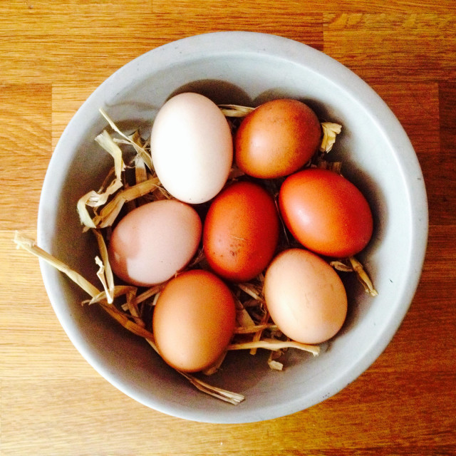 """Free-range organic eggs"" stock image"