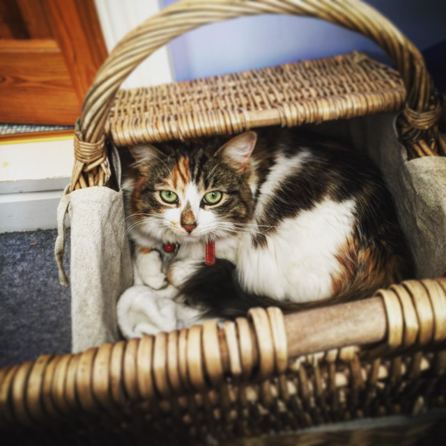 """""""Adorable cat in a basket"""" stock image"""