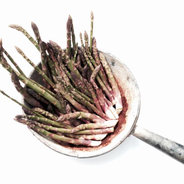 """Freshly picked garden asparagus"" stock image"