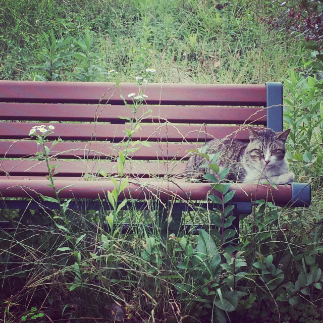 """Stray cat on the Bench"" stock image"