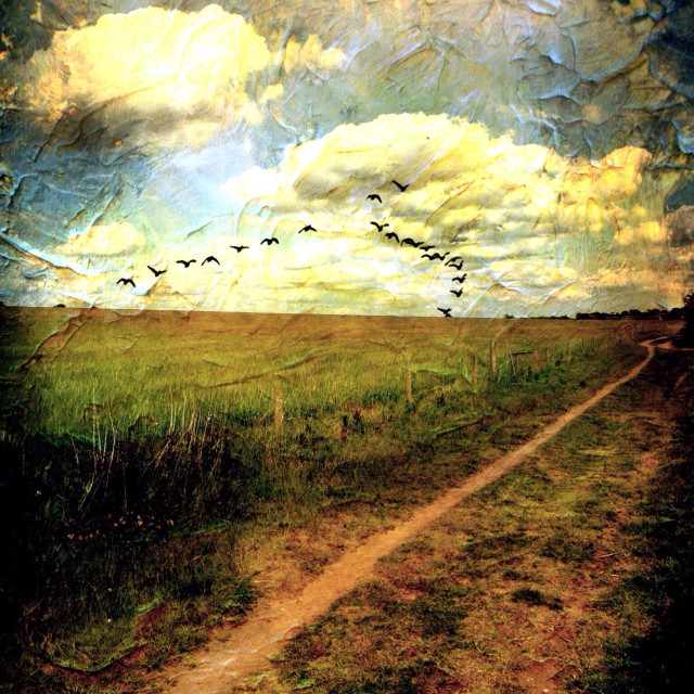 """""""Country track with formation of birds. Sudbrook, Lincolnshire, England."""" stock image"""