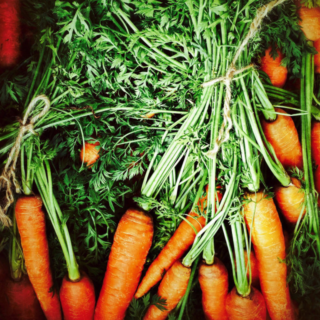 """Freshly picked organic carrots"" stock image"