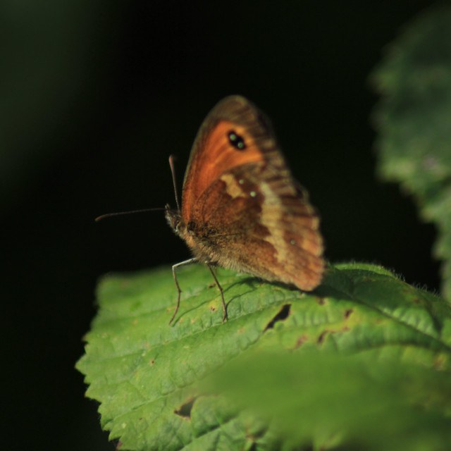 """""""Butterfly on leaf"""" stock image"""