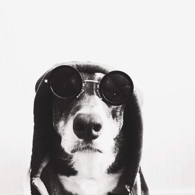 """Gangsta doggy"" stock image"