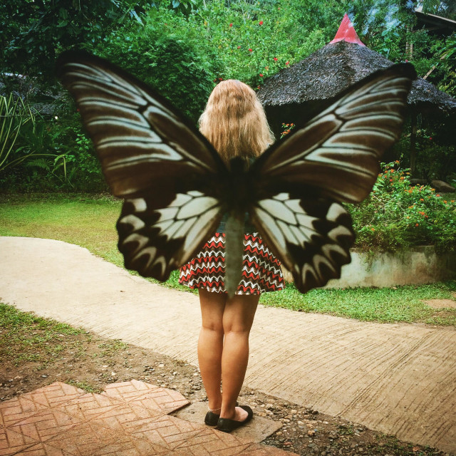 """Butterfly farm bohol"" stock image"