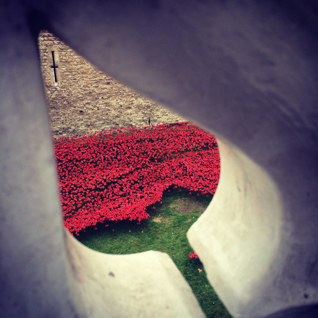 """""""Tower of London poppies from tower bridge through the railings"""" stock image"""